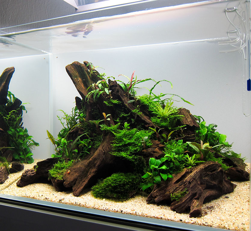 tigergarnelen im glas garten mini m aquarienvorstellung der wirbellotse. Black Bedroom Furniture Sets. Home Design Ideas
