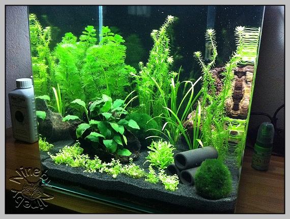 mein 30l nano cube aquarienvorstellung der wirbellotse. Black Bedroom Furniture Sets. Home Design Ideas