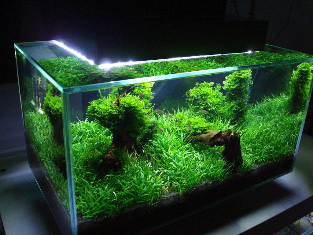 mein fluval edge nanobecken aquarienvorstellung der wirbellotse. Black Bedroom Furniture Sets. Home Design Ideas