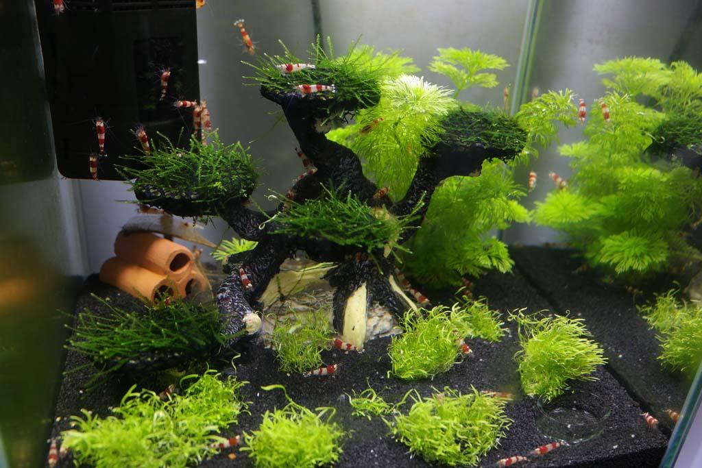 meine nano welten aquarienvorstellung der wirbellotse. Black Bedroom Furniture Sets. Home Design Ideas