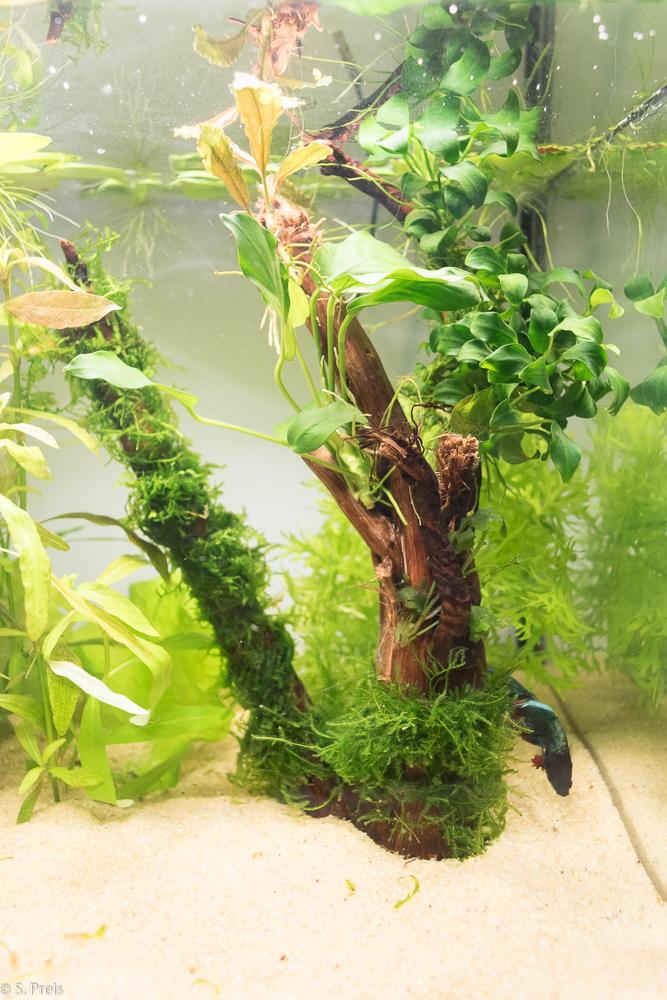 20 liter f r einen kleinen fisch aquarienvorstellung. Black Bedroom Furniture Sets. Home Design Ideas