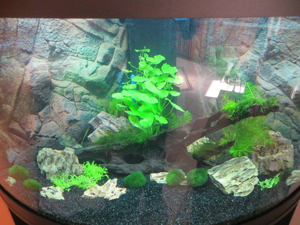 aquarium richtig einrichten top aquarium richtig einrichten with aquarium richtig einrichten. Black Bedroom Furniture Sets. Home Design Ideas