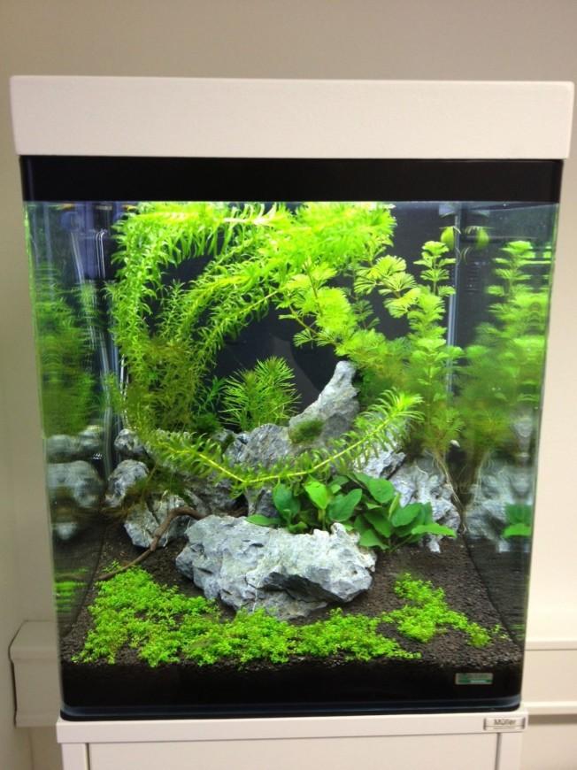 Mein Nano Cube - Aquarienvorstellung - Der Wirbellotse!