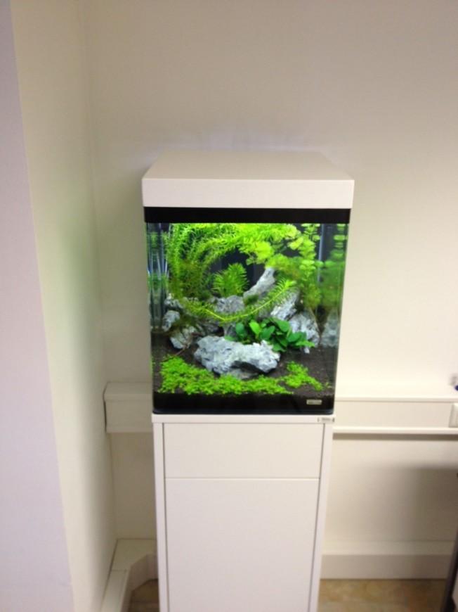 mein nano cube aquarienvorstellung der wirbellotse. Black Bedroom Furniture Sets. Home Design Ideas