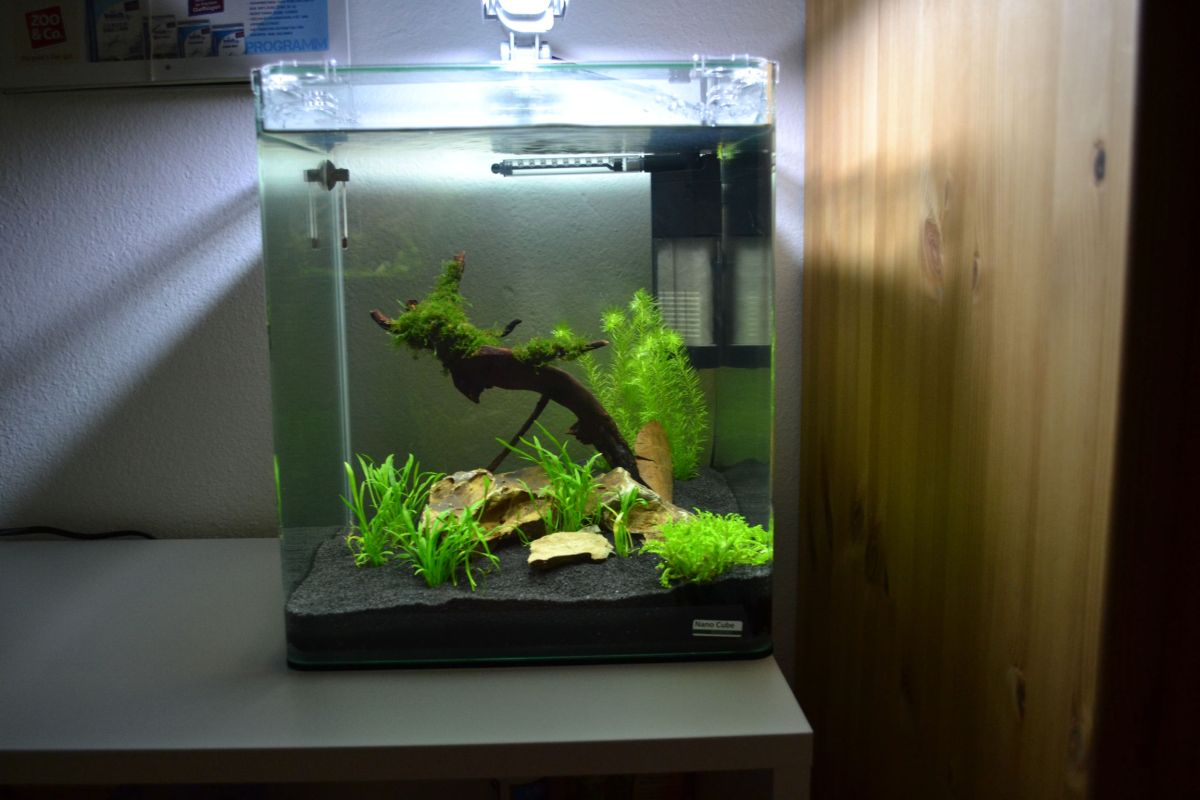 mein 30l nano cube aquarienvorstellung der wirbellotse. Black Bedroom Furniture Sets. Home Design Ideas