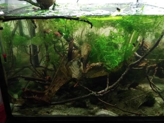 """120 Liter Naturbecken mit 150 """"verschwundenen"""" Neos :-))"""