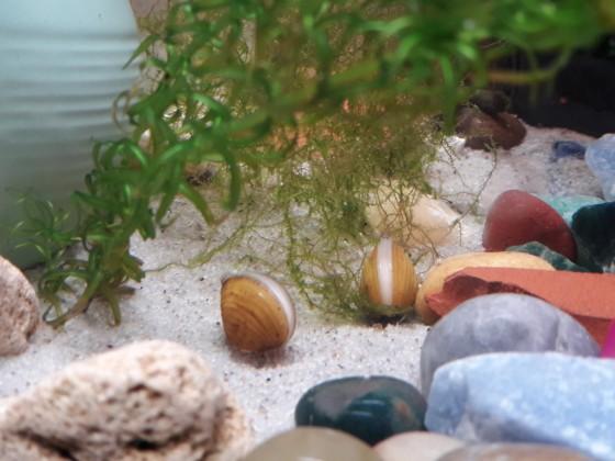 Muscheln zum reinigen des Wassers