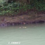 Löcher am Flussufer dienen als Versteck