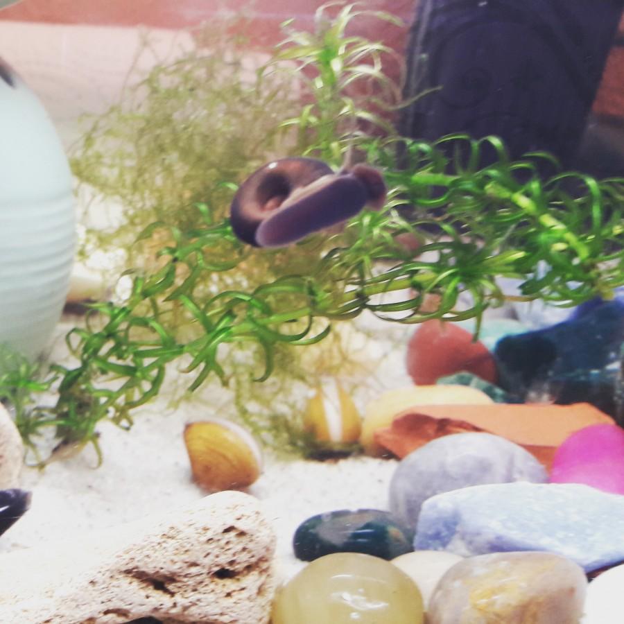 Schnecke und Muscheln