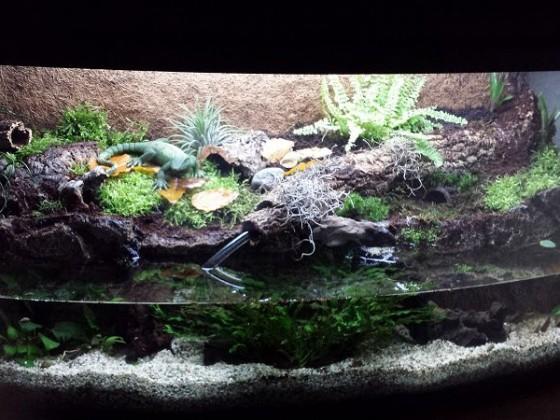 unser Krabbenbecken