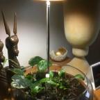 Pflanzenlampe für Wabi-Kusa mit Bastelplastik-Fuß
