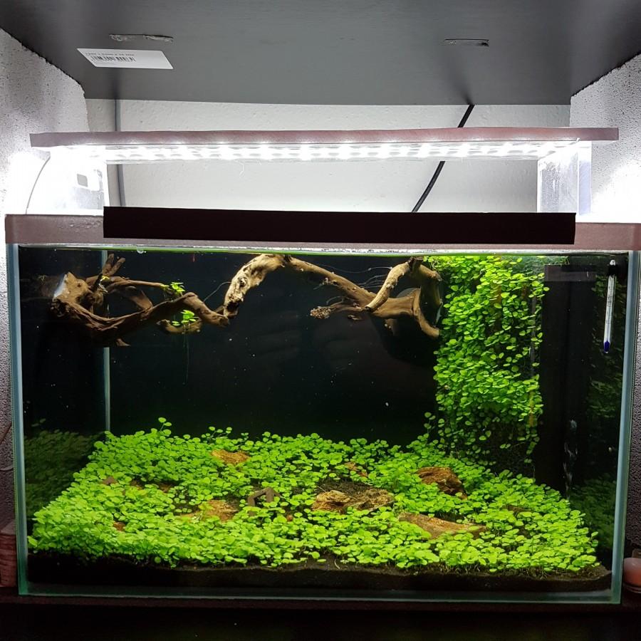 25liter Aquarium Galerie Der Wirbellotse