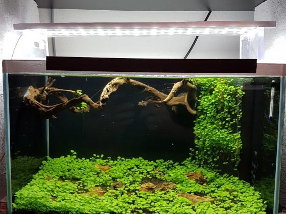 25Liter Aquarium